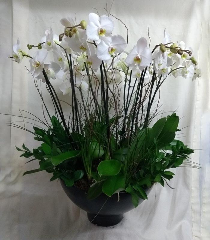 Arreglo Floral De Orquídeas Phalaenopsis Blanca